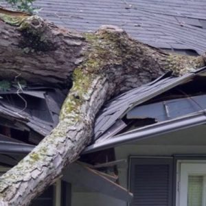 a snapshot of a fallen tree branch on roof