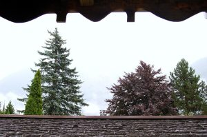 Pic Showing Best Gutter Guards for Pine Needles
